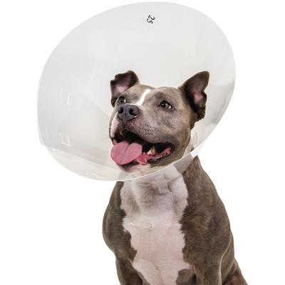 Patterson Veterinary Baxter Clear Elizabethan Collar