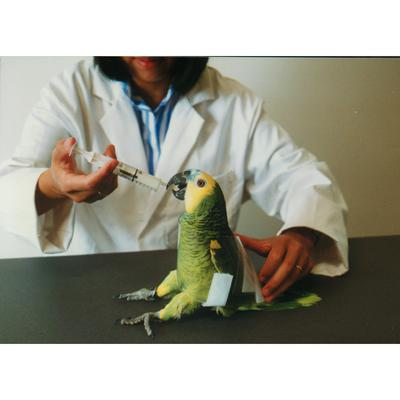 Auspex Avian Restrainer