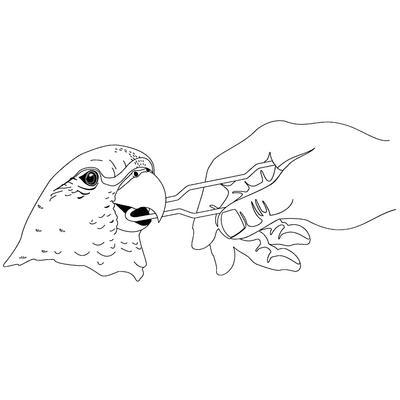 Avian Oral Speculum