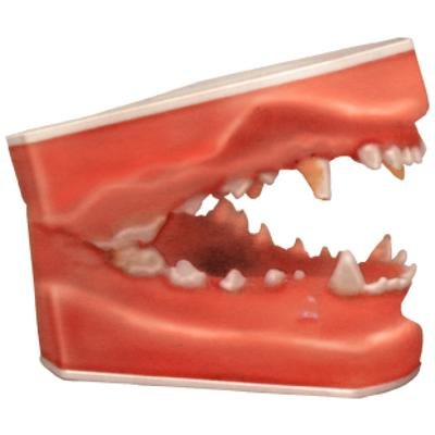 Dental Pathology Models