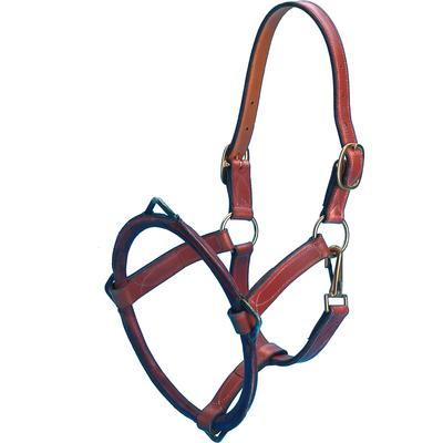 EquiVet Dental Halter