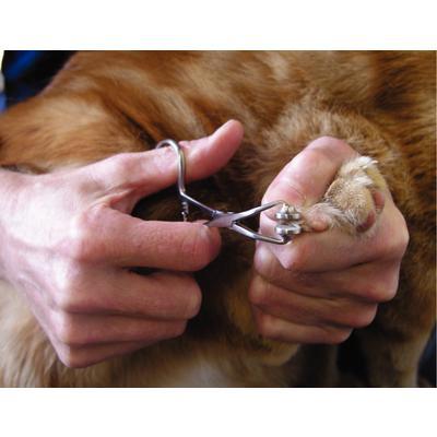 Feline Declaw Forceps