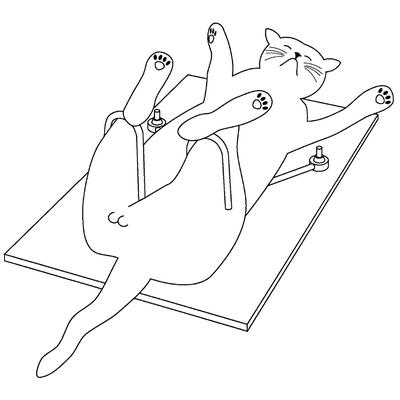 TomCat Positioner