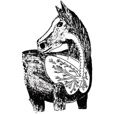 Equine Tracheal Wash Kit