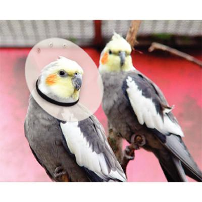Saf-T-Shield™ Lightweight Collars for Birds
