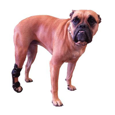 Pet Brace (Splint)