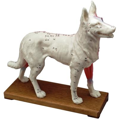 ACUPUNCTURE MODEL CANINE J1124C