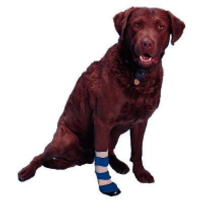 Buster Dog Socks