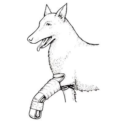 Small Paw Splint