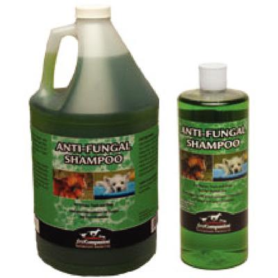 First Companion Anti- Fungal Shampoo