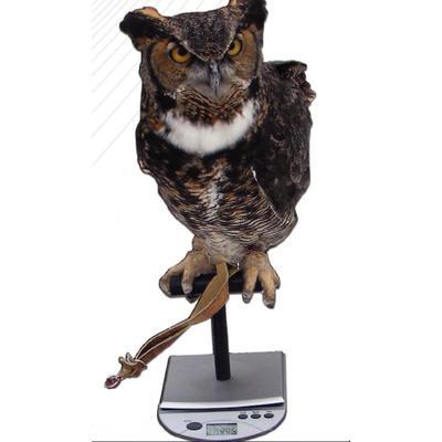 Avian Scale