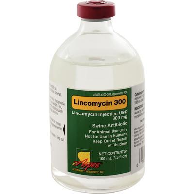 Lincomycin 300 Injectable