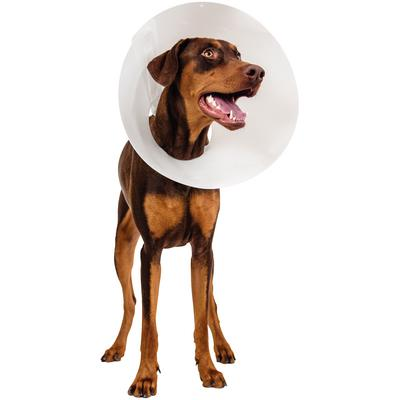 Patterson Veterinary Baxter Elizabethan Collar