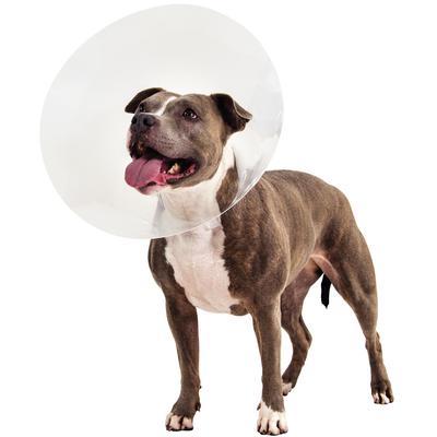 Patterson Veterinary Lock Rite Elizabethan Collar