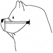 Chow/Rottweiler